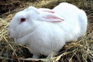 Клетки для кроликов своими руками в 2