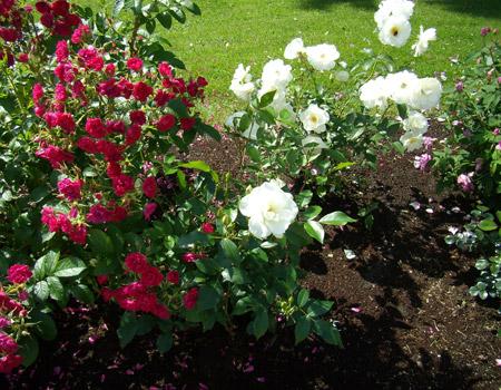 Розовые клумбы в розовом павильоне